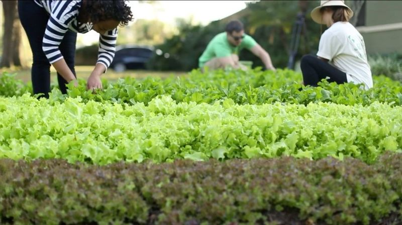 So far, 26 lawns have been converted into lush vegetable patches through Fleet Farming