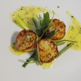 Pan Seared Sea Scallops w/ Sage Beurre Blanc