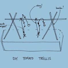 Tomato DIY: Pruning and Trellises
