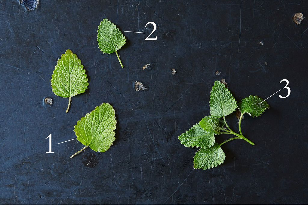 Fresh Lemon Balm Leaves, from Food52