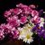 Efa484da bb97 4889 8aea 6b22a44cb134  blooming250