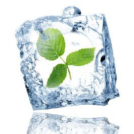 876fedd3-55fd-4ced-bb03-5c26adb5a1b4--ice_cube_with_leaf