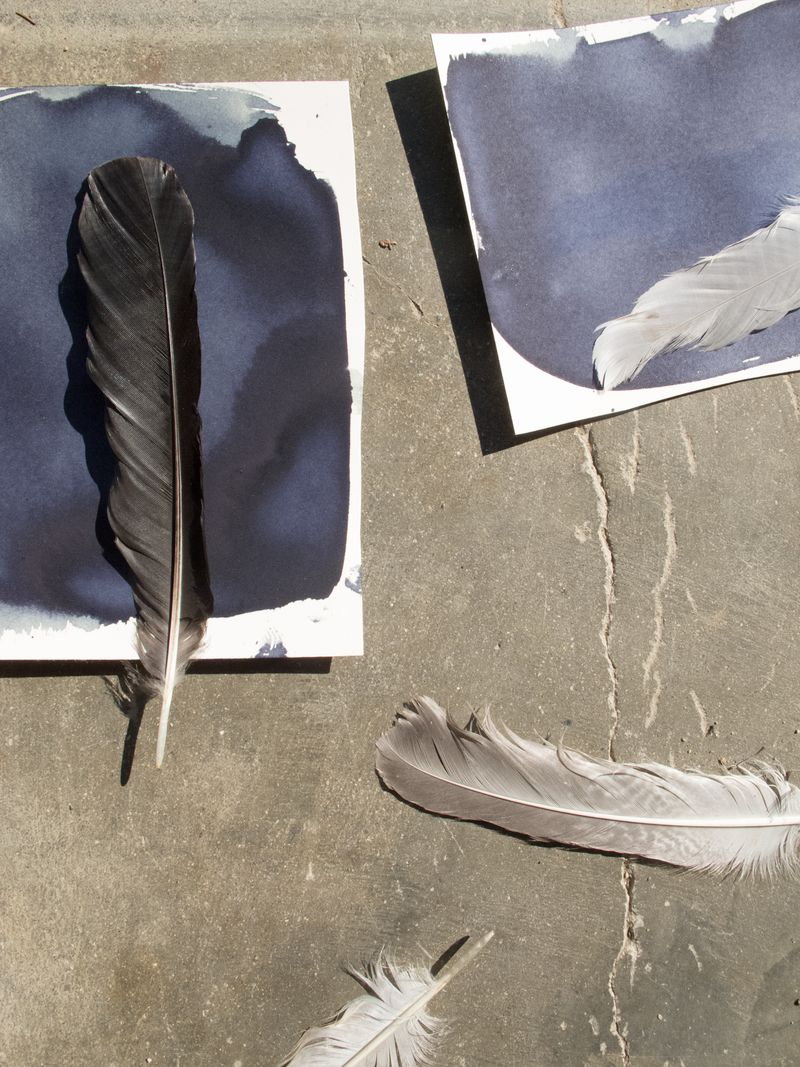 feathers for cyanotype rinne allen