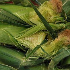 Summertime Corn Risotto