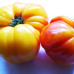 Roasted Corn and Tomato Lasagna