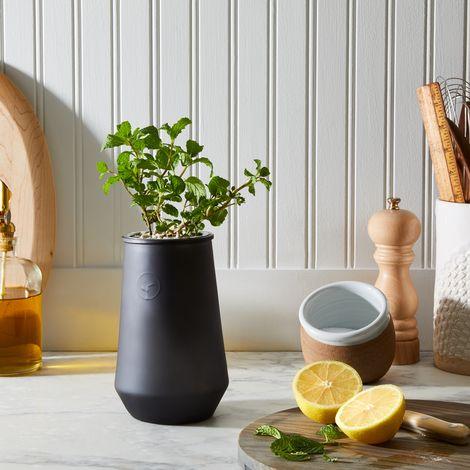 Smoked Glass Garden Grow Kit