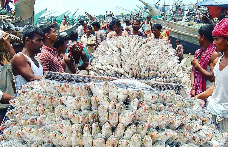 Meet Hilsa, the Beloved Fish That Connects Bengalis