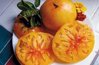 F743e02b 7e63 486f b34f 9cc90e2784a4  heirloom tomato2