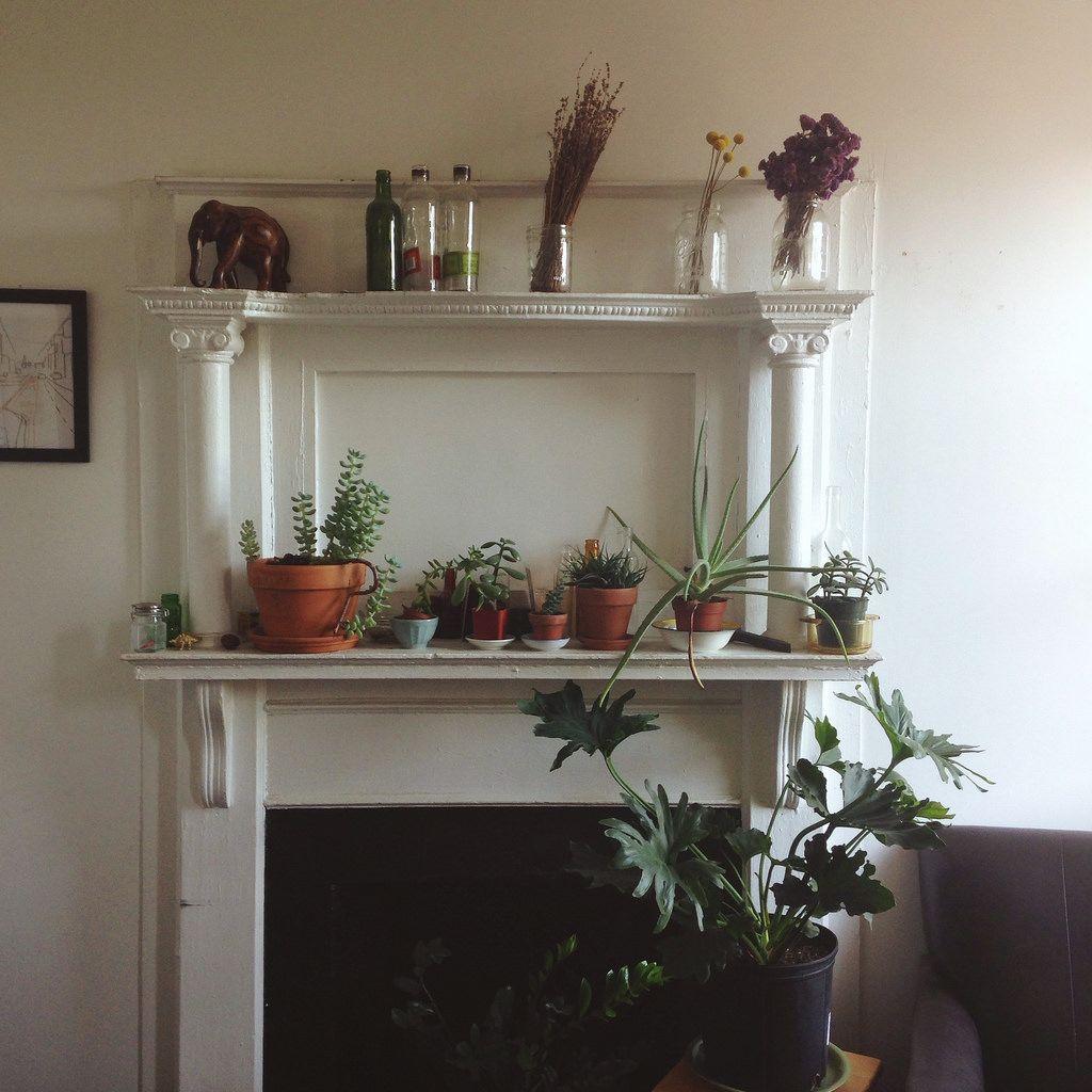 BK plants