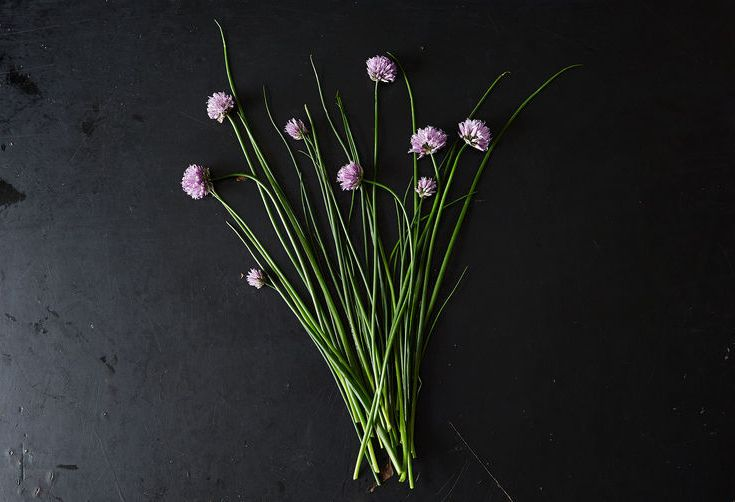 5 Links to Read Before Eating Alliums