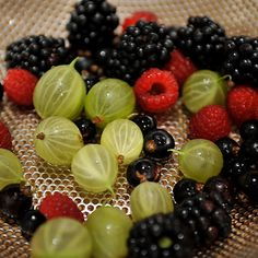 Wild Berry Basil Panna Cotta