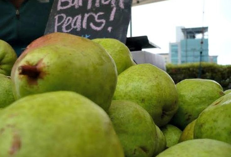 Aw Snaps: Bartlett Pears