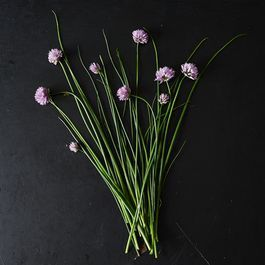 All About Chive Blossoms