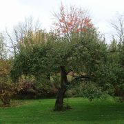 80ed18f7 0961 4a5b 95e2 ea3da70df5b8  tree