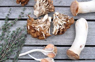 E733de57 09f3 461e 83e2 afcf9a3aef71  mushrooms
