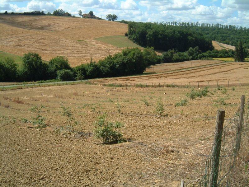 Truffle field 2