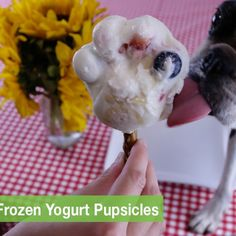 Gus' Summertime Frozen Yogurt Pupsicles