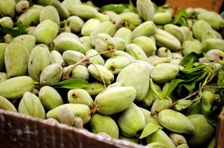 36cbe7b1 2abe 45b1 9547 fb67a745e0a4  fresh almonds