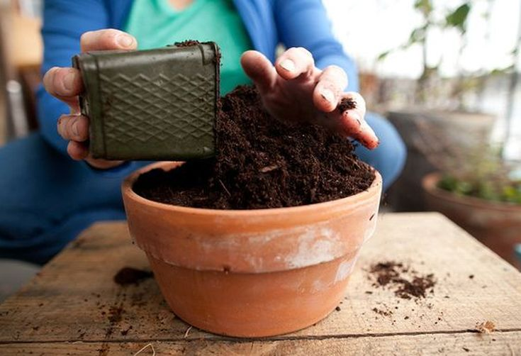 Setting Up Your Container Garden: Tips for Apartment Dwellers and Small Spaces