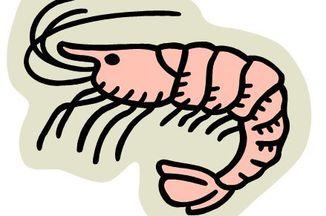 F706928a e8de 461b b6ed b53fdec456ea  ca shrimp08