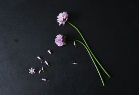 5 Smart Uses for Chive Blossoms