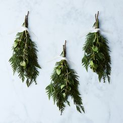 Fresh Mistletoe Branch (Set of 3)