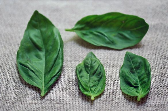 Fresh Basil Recipe Contest