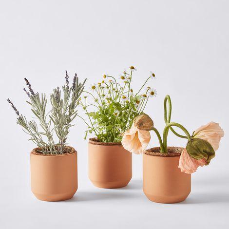 Tiny Terra-Cotta Grow Kit