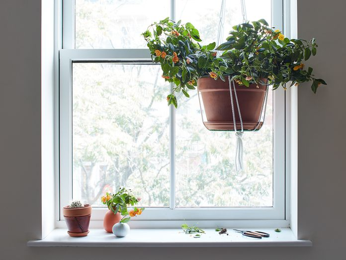 The Best Reason to Prune Flowering Plants (Besides That It's Good for Them!)