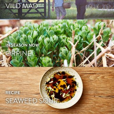 The Sleek, Stunning New App That'll Teach You How to Forage