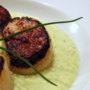 D36868c3-e11d-4174-89fb-edb8919eea77--seared_scallop_spring_onion_tarragon_cream