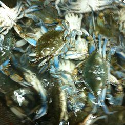 Julie's Deviled Seafood