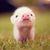 E026ce6f d104 4a01 8974 272cb24b60cd  lil piggy