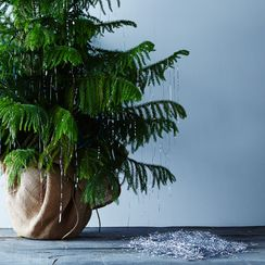 2 Tricks for a Snowy, Icicle-Laden Christmas Tree That Won't Melt