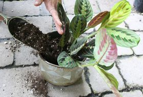 Your Best Bet for Revitalizing an Unhappy Houseplant
