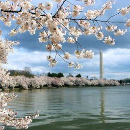 Your Guide to the Good Life in Washington D.C.