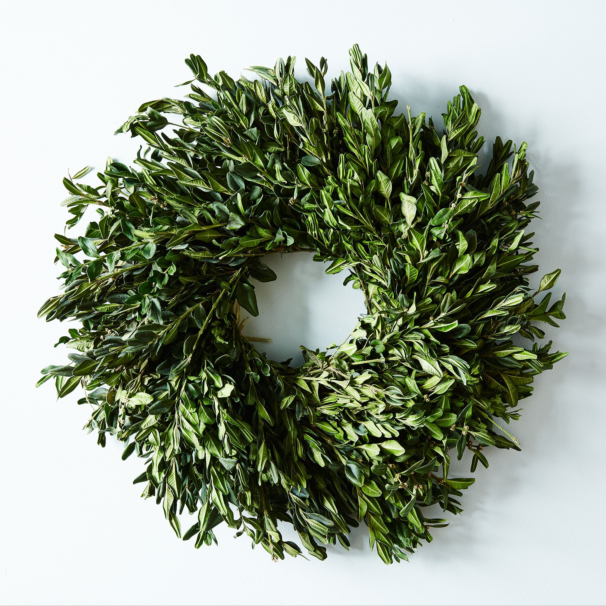 Boxwood Wreath - No Hanger