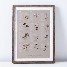 Framed Seasonal California Native Wildflower Print