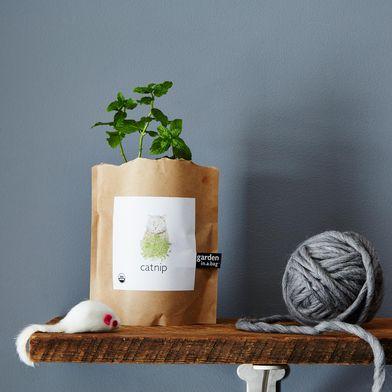 Catnip Garden in a Bag (Set of 2)