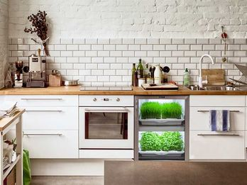 5 Clever Devices Making it Easier to Grow Greens at Home