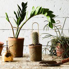 Plant Sticks (Set of 6)