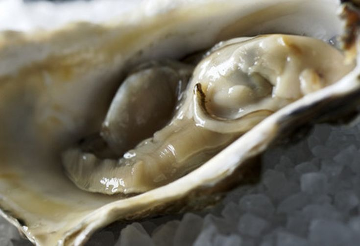 Ccb0ab6f-ffc4-48f7-8386-91283a060350--oysters-large