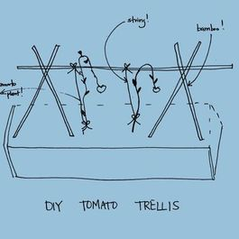 Tomato DIY: Pruning and Trellises