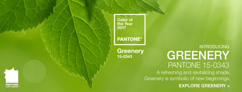 Pantone Color Of The Year do you like pantone's 2017 color of the year?