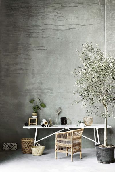 6b2efaba b0fd 44c4 a35c 38f0b93220c4  olivetree1 7 Types of Fruit Trees You Can Grow in Your Living Room