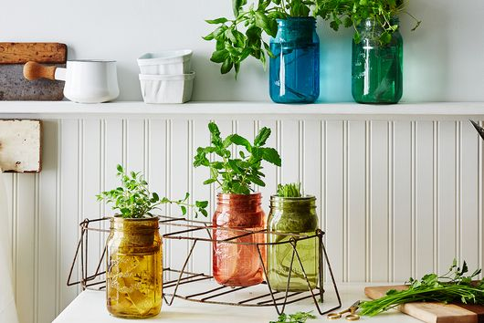 Just How Easy Is a Self-Watering Herb Kit? (Extremely)