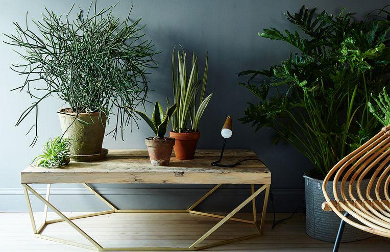 5 No-Kill House Plants for Any Home