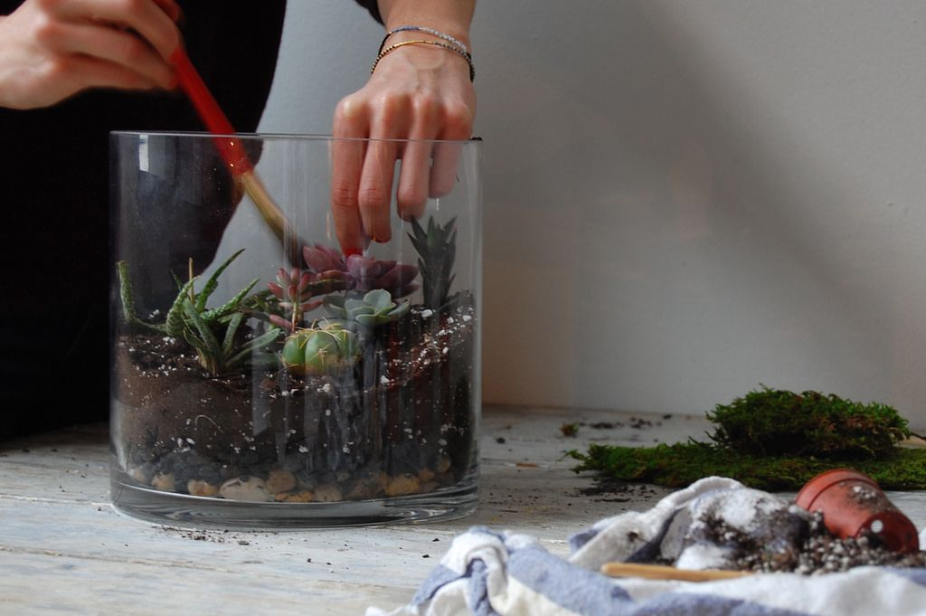 Clean Plants, DIY Terrarium