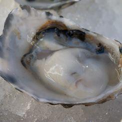 Oysters with Cucumber-Jalapeño Granita
