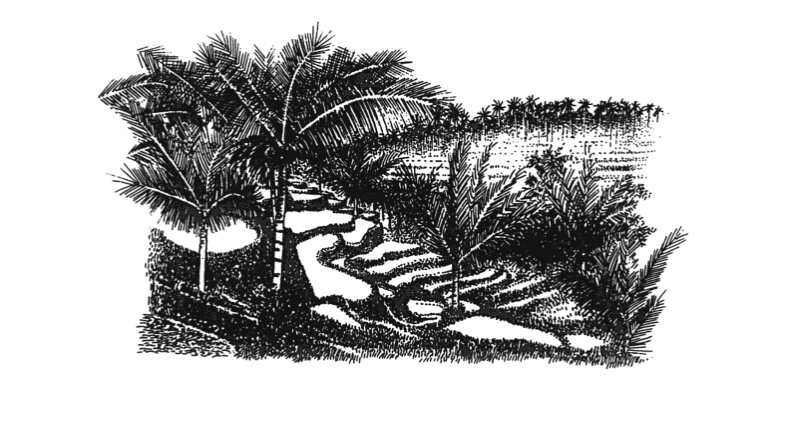 From Sri Owen's 'The Rice Book' (1993). Illustration by Soun Vannithone.